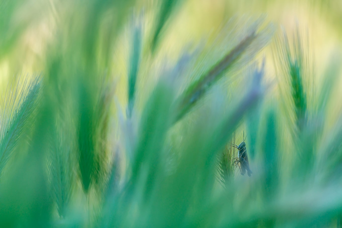 javier-aznar-sony-alpha-7RIII-cricket-waits-patiently-on-plant-stem-surrounded-by-foliage